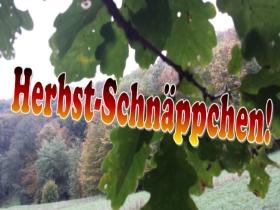 #Herbst-Schnäppchen