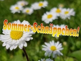Sommer-Schnäppchen  2019